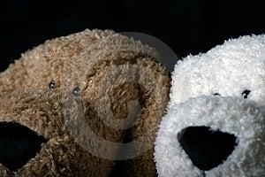 Cabeza del perrito Fotos de archivo