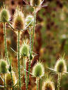 Prickle01 Stock Photo