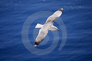 Seagul Stock Images - Image: 20010964