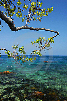 Tree With Clear Sea Stock Photography - Image: 20015382
