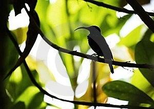 Longtemps - Silhouette De Barbe De Bec Photographie stock - Image: 20019602