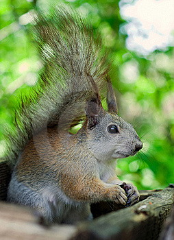 Squirrel Eating Seeds Stock Photography - Image: 20021652