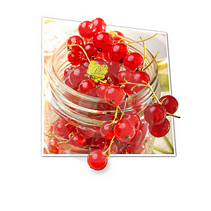 Red Currants Stock Photo - Image: 20025910
