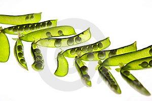 Open Green Pea Pods Stock Photos - Image: 20026323