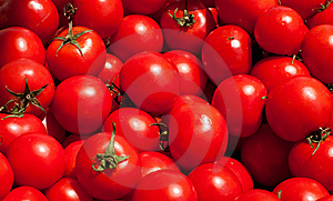Multitude Of Tomatoes Stock Photo - Image: 20027040