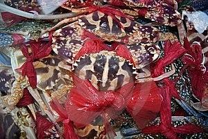 Spend Crab Stock Photo - Image: 20027950