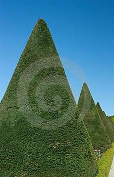 Garden With Green Shrub Cropped Stock Photos - Image: 20028963
