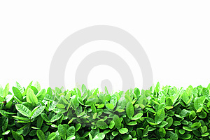 Leaves Layer Royalty Free Stock Photo - Image: 20030985
