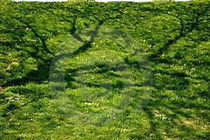 Green Grass Stock Photo - Image: 20045230