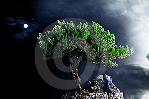 Lonely Night Tree Royalty Free Stock Photos - Image: 20047658