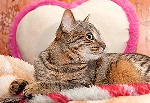 Cat Lie On Pillow Stock Photos - Image: 20052153