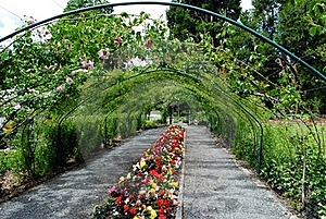 Rose Arbor Royalty Free Stock Images - Image: 20055919