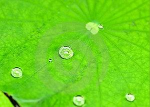 小滴水 库存图片 - 图片: 20063414