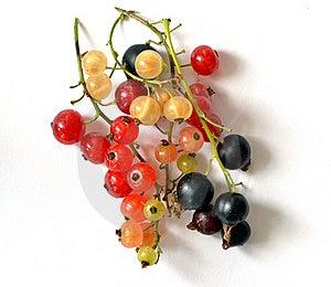 Vitamins Royalty Free Stock Photography - Image: 20071977
