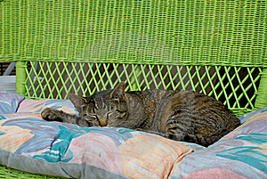 Sleeping Cat Royalty Free Stock Images - Image: 20073779