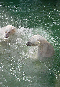 Bears Royalty Free Stock Images - Image: 20074819