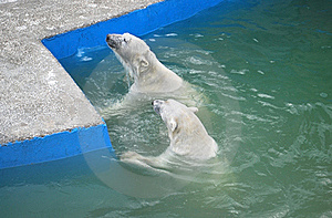 Bears Stock Images - Image: 20075194