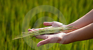Symbolic Gesture Suggesting Stock Photo - Image: 20080250