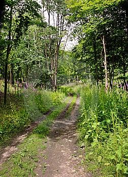 Track Though English Woodland Stock Photos - Image: 20085893