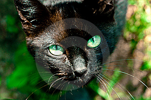 Black Cat Stock Photography - Image: 20088222