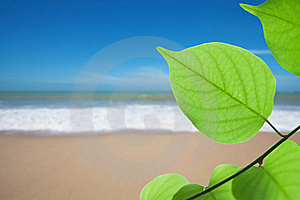 Green Leaf On Beach Royalty Free Stock Image - Image: 20093556