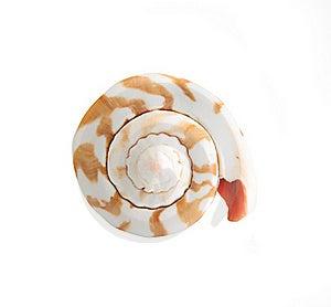 Seashell Royalty Free Stock Images - Image: 20095179