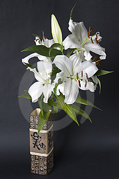 Lily Royalty Free Stock Photos - Image: 20095638
