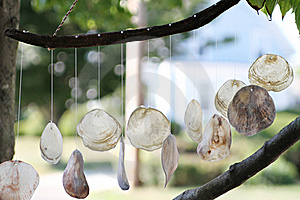 Shells Decoration Hanging From The Tree. Stock Photos - Image: 20098053