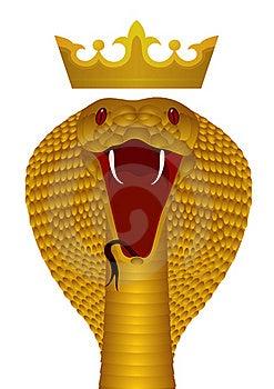 King Cobra Gold Stock Photo - Image: 20105710