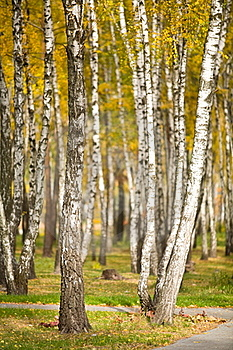 Autumn Park Stock Image - Image: 20107171