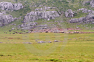 Sheep Flock On A Mountain Meadow Stock Images - Image: 20107604
