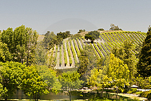 California Vineyard Stock Images - Image: 20118614