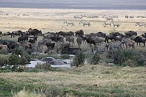 Waterhole Stock Photo - Image: 20133360