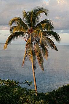 Seychelles Panorama Royalty Free Stock Photography - Image: 20133707