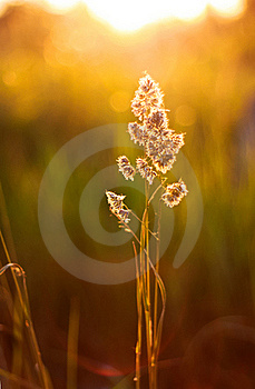 Sunset Plant Stock Images - Image: 20137924
