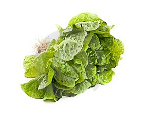 Lettuce Royalty Free Stock Images - Image: 20138429