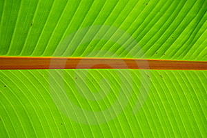 Palm Leave Shine Royalty Free Stock Images - Image: 20144309