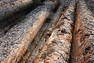 Felled Trees Royalty Free Stock Photo - Image: 20147015