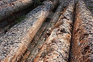 Felled Trees Royalty Free Stock Photo - Image: 20147015