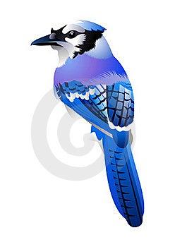 Birdy Stock Image - Image: 20151741