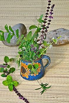 Fresh Mediterranean Herbs Royalty Free Stock Images - Image: 20164219