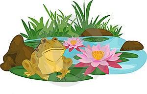 Frog Lotus River Stock Photography - Image: 20173212