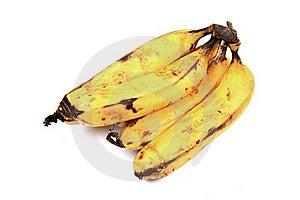 Hybrid Bananas Royalty Free Stock Image - Image: 20180426