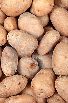 Potato Background Stock Photos - Image: 20180883