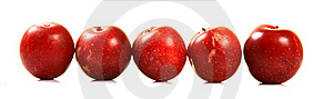 Ripe Red Plums Stock Image - Image: 20181261