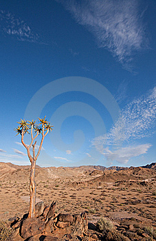 Richtersveld In South Africa Stock Photo - Image: 20182720