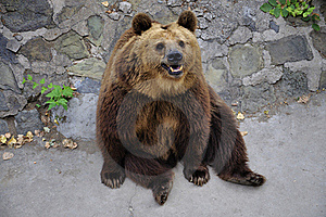 Bear Royalty Free Stock Photography - Image: 20188477