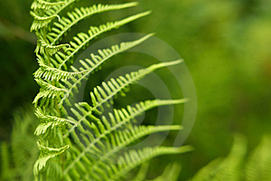 Pattern Of Fern Leaves With Copyspace Stock Image - Image: 20193171