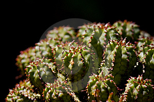 Prickly Beauty Stock Image - Image: 2020341
