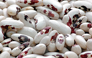 Kidney  Bean4 Stock Photo - Image: 2024020